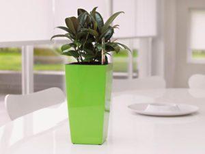 Горшок для фикуса — уютный «домик» и залог здоровья растения