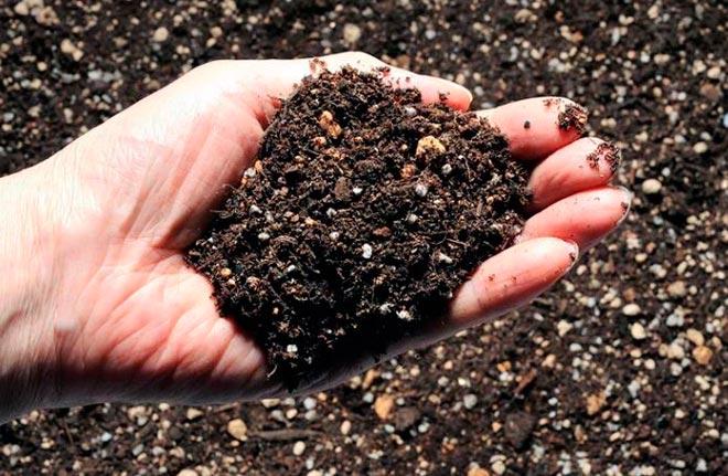 почва в руке