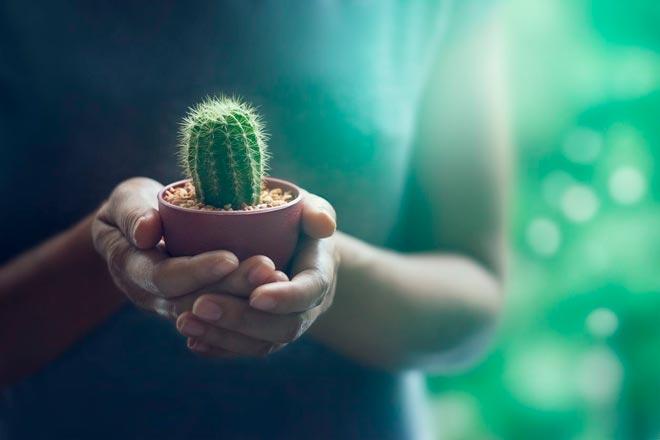 кактус в руках