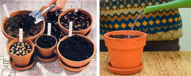 почва для кислицы