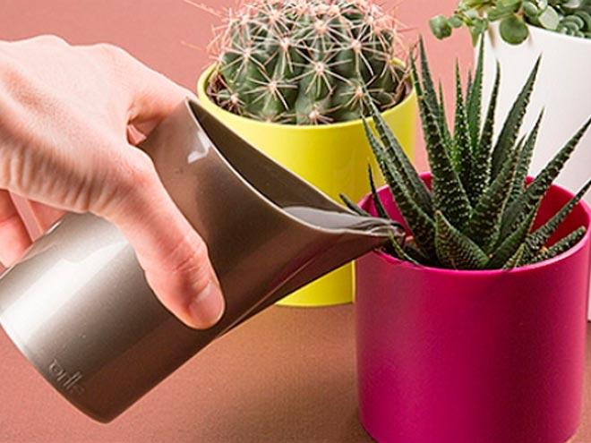 поливает кактус водой
