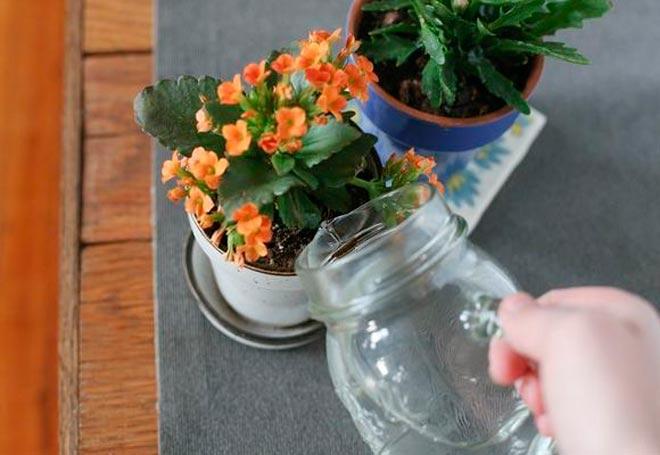 поливает цветок