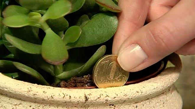 монетка в горшке
