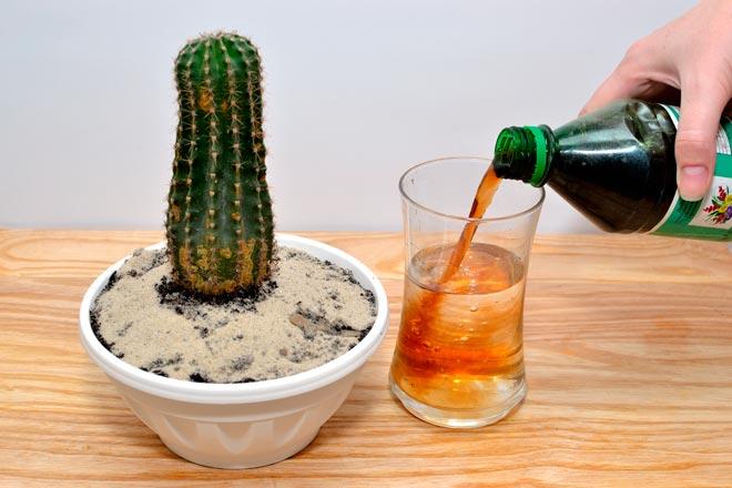 удобрение для кактуса