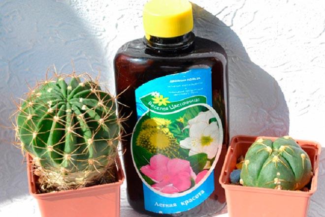 кактусы и удобрение