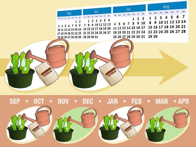 подкормка кактуса