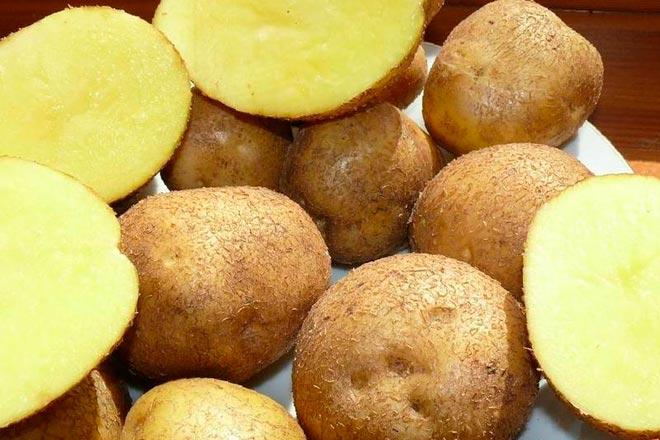 картофель на срезе