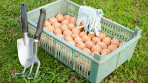Чем и как эффективнее обработать картофель перед посадкой