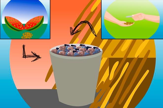 опунция из семян