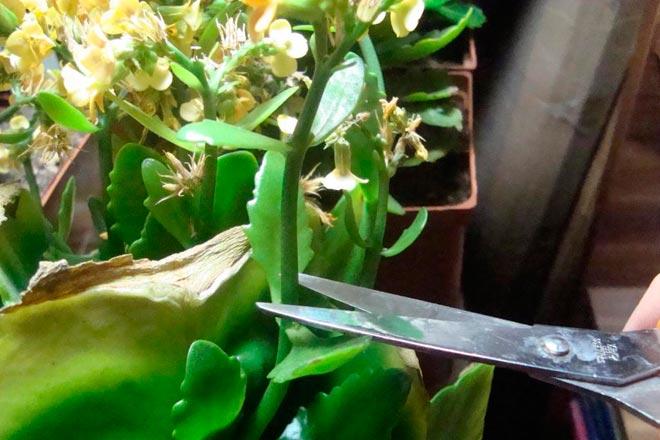 обрезка после цветения