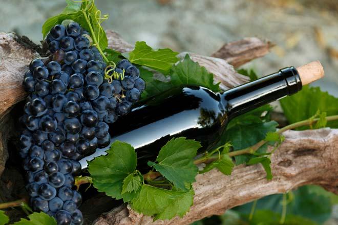 Сорта винограда для вина: белые, красные, для средней полосы, для Черноземья