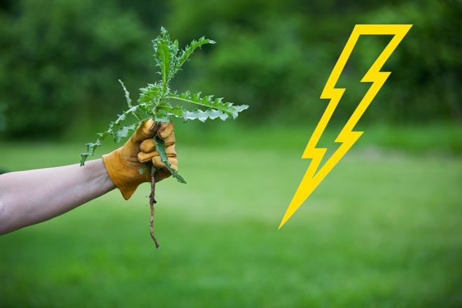 сорняк в руке