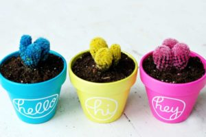 Все, что нужно знать про цветные кактусы