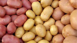 Какой урожай картошки можно собрать с 1 гектара?