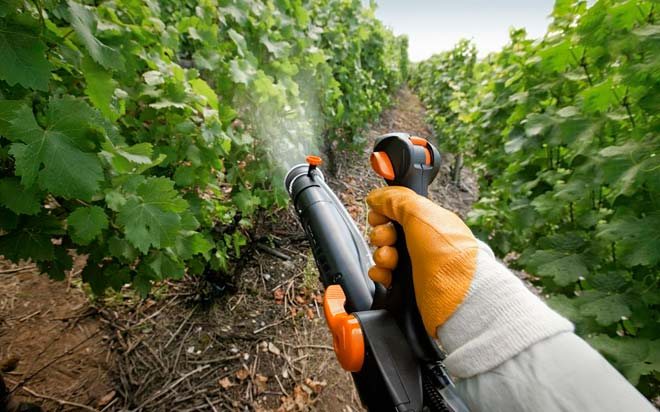 опрыскивание виноградника