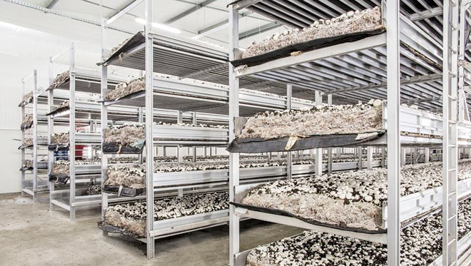 стеллажи с грибами