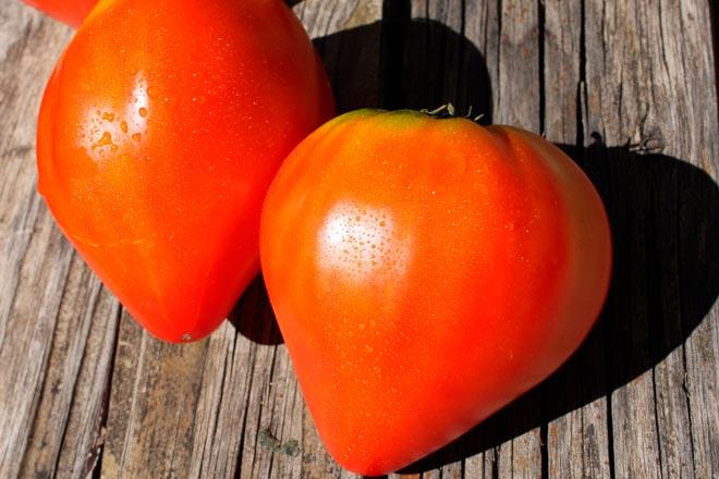 Помидоры бычье сердце — выращивание и описание подвидов сорта