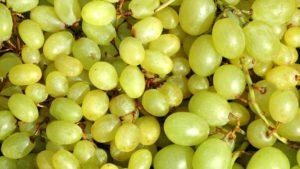 Что нужно знать о винограде Кеша