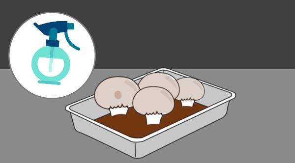 опрыскивание грибов