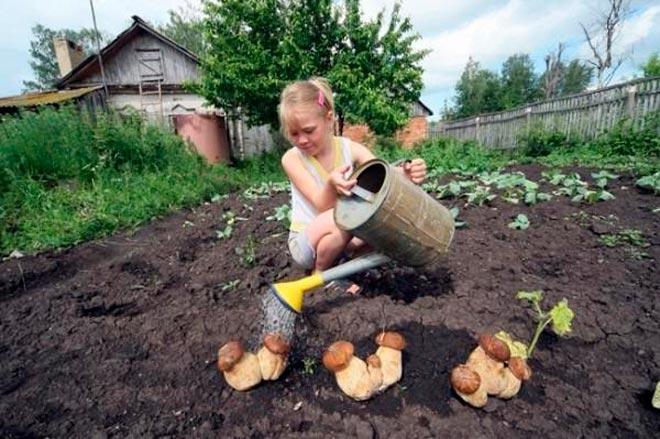 девочка поливает грибы