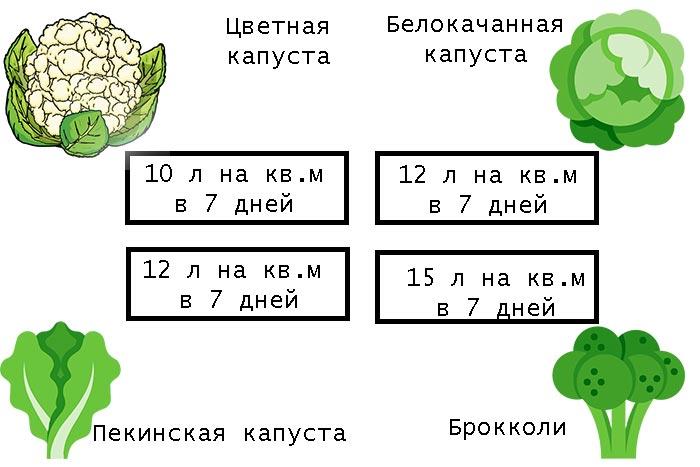 полив разных видов капусты