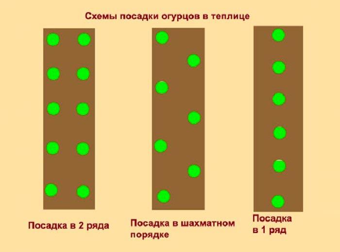 схемы посадки огурцов в теплице