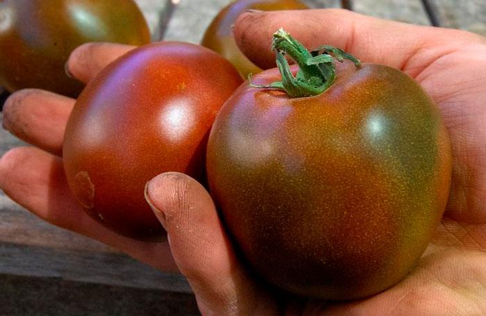 помидоры в руке