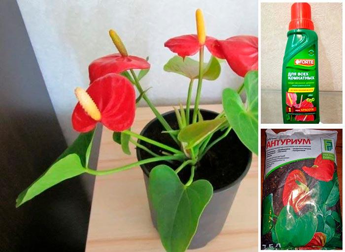 жидкие и сухие удобрения для цветов