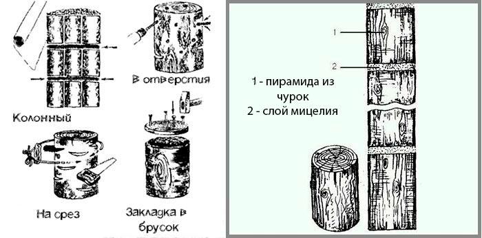 способы закладки мицелия