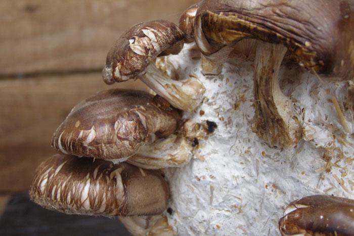 блок для грибов