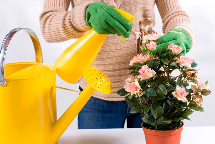 опрыскивание цветов