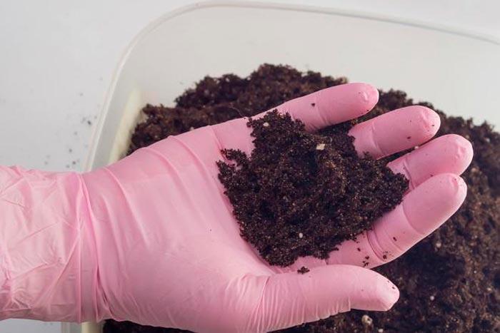 почва для сельдерея