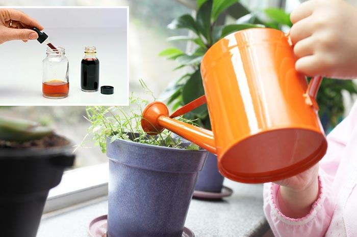йод для комнатных растений