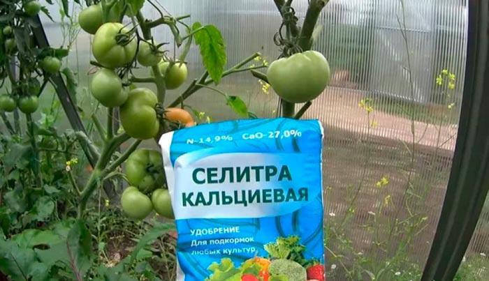 кальциевая селитра и томаты