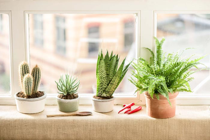 Светолюбивые цветущие и пестролистные комнатные растения