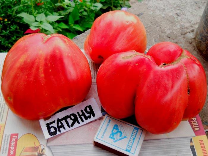 томаты батяня