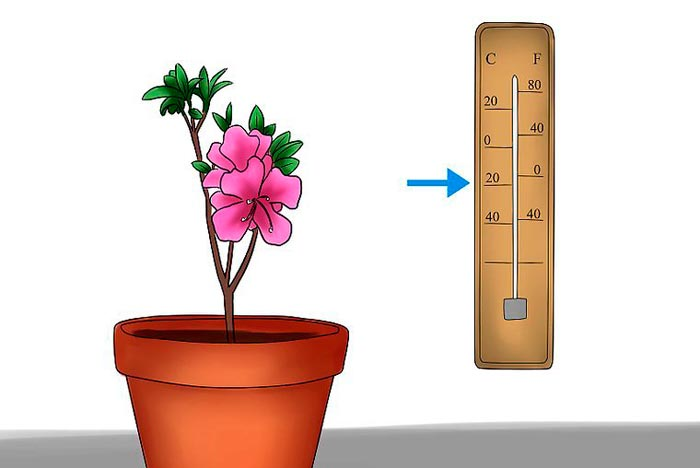 температура для цветка