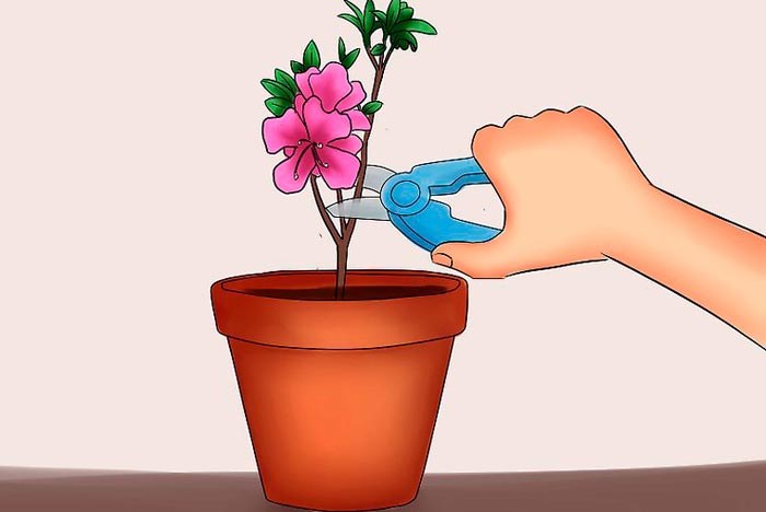 обрезка цветка