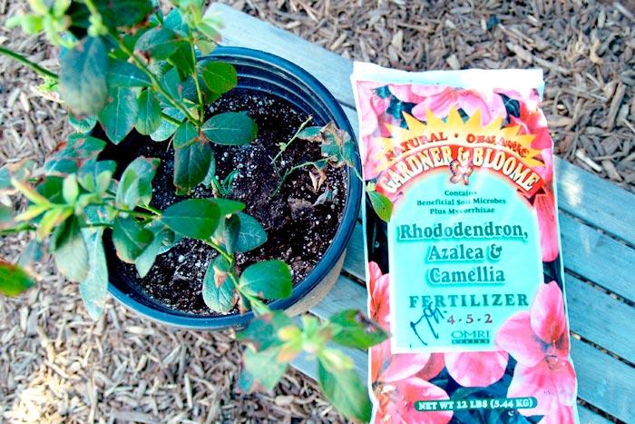 удобрения для рододендрона