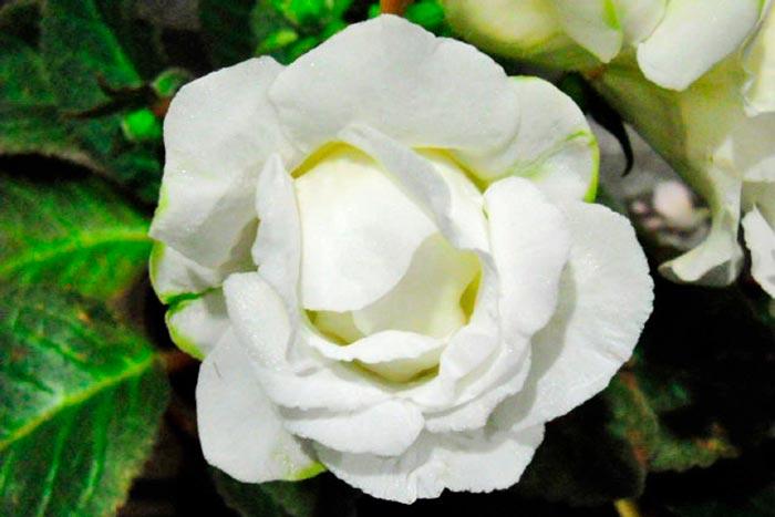белая махровая