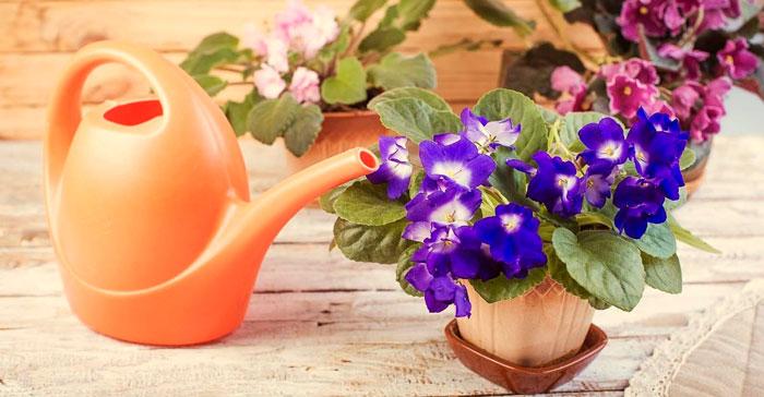 полив цветка