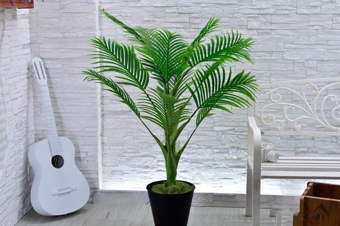 Уход за пальмой арека в домашних условиях