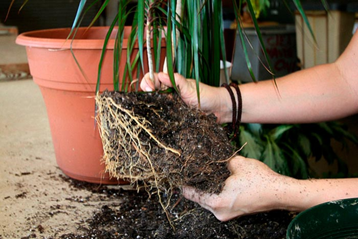 осмотр корней