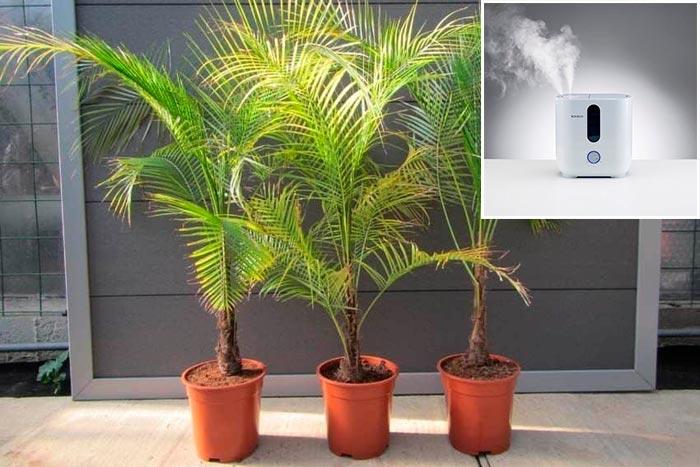 увлажнитель воздуха для пальмы