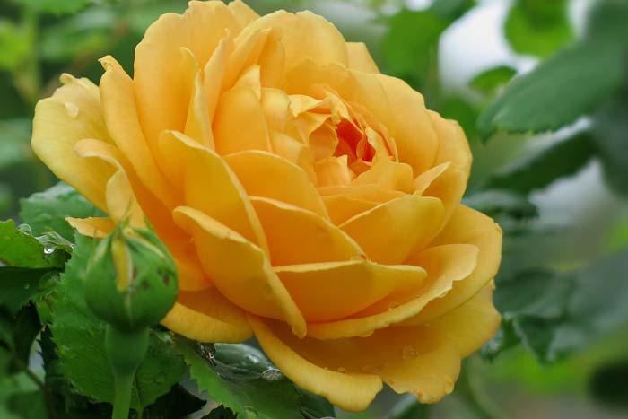Желтый-Дол