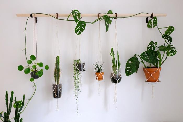 10 разновидностей комнатных лиан для выращивания дома