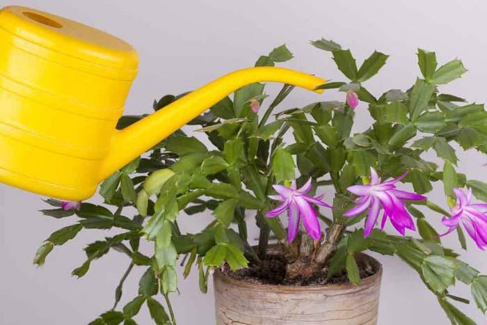 полив во время цветения