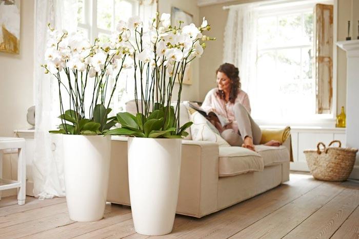 белые цветы в интерьере