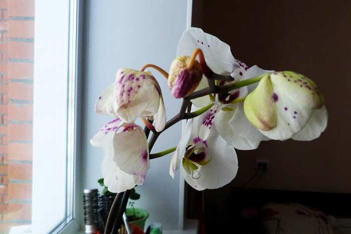 осыпаются цветы